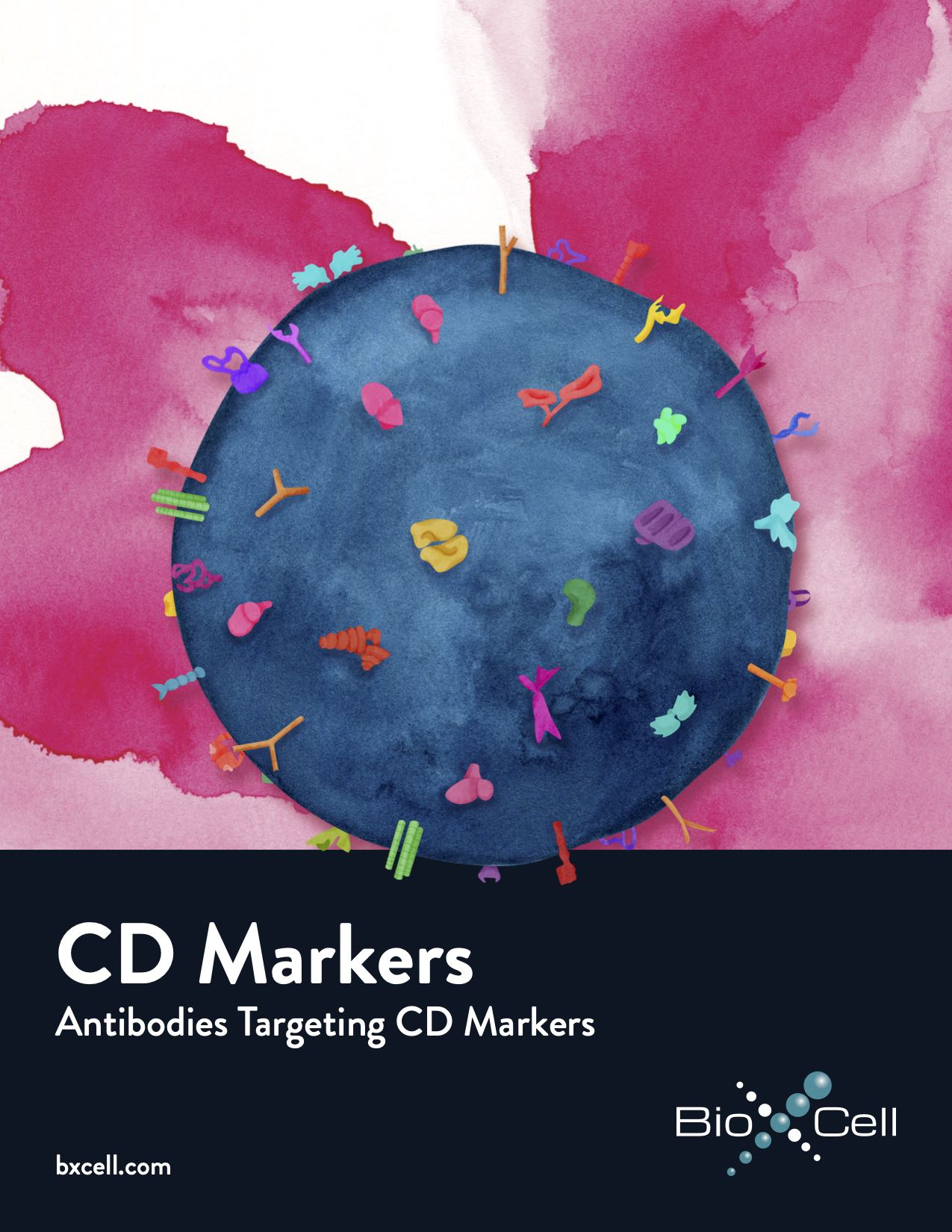 CD Marker Brochure